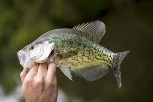 TC Photos Kansas Outfitter Lodge Fishing Hunting Turkey Whitetail Waterfowl 0374 (1)